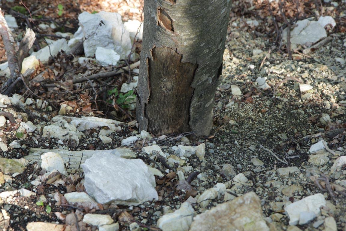 Begrabener Baum