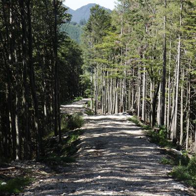 Forststraße im Wald