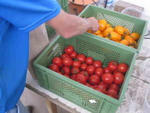 Lecker-Tomaten rot-gelb